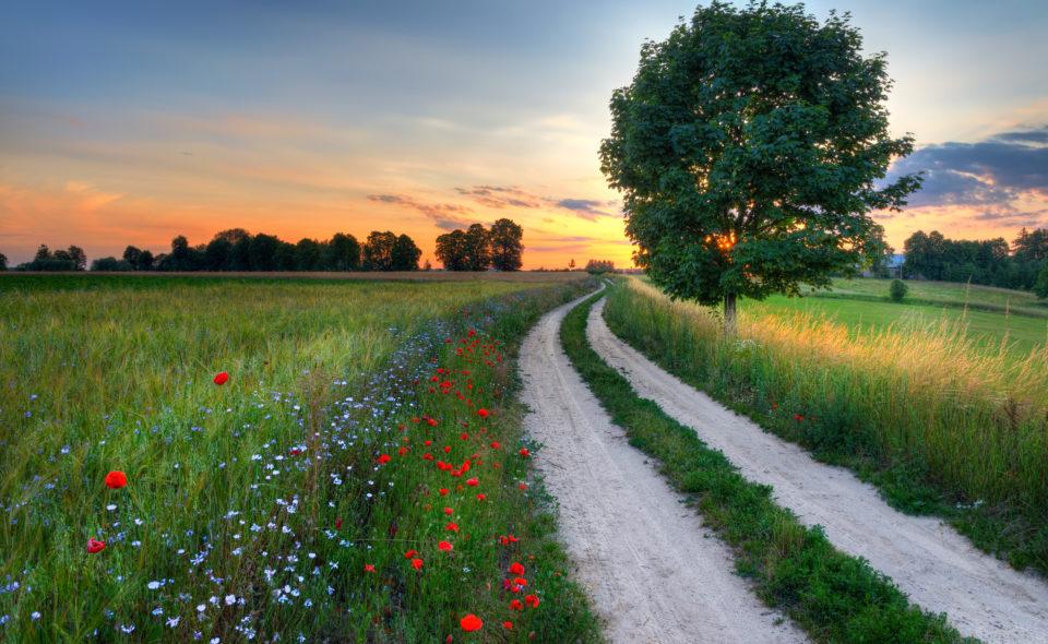 """Konkurs """"Wakacje na Wsi # Odkrywam"""". Zrób zdjęcie pięknych miejsc wokół siebie i prześlij do Nas!"""