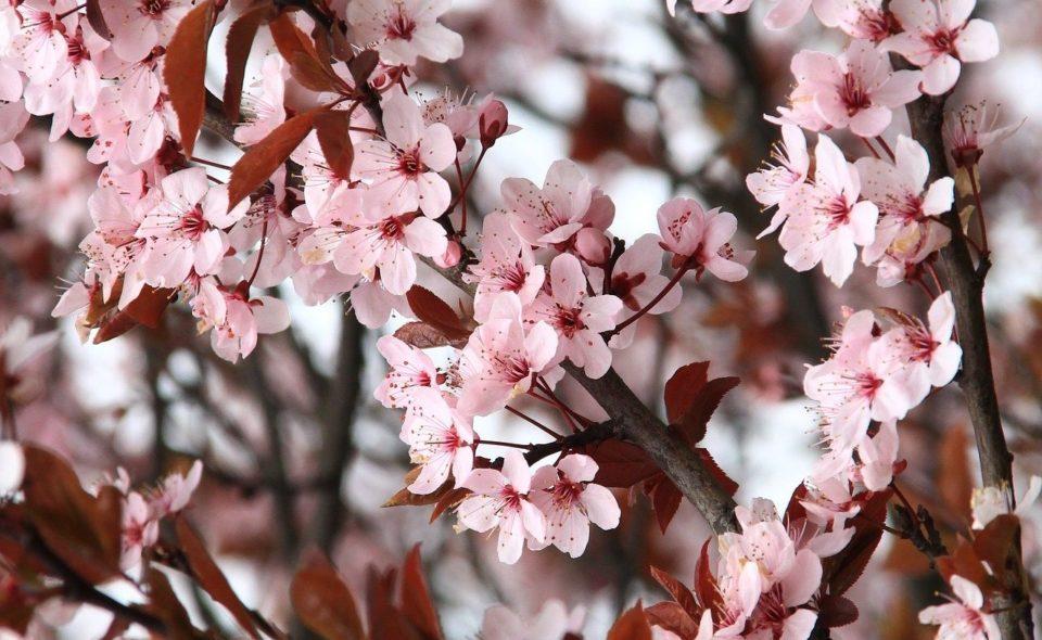 Święto wiosny – nadejście tego co nowe