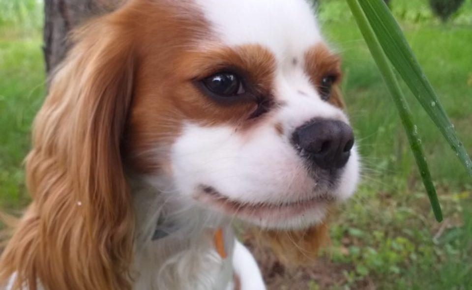 Dzień Psa czyli o psach ogrodnika i nie tylko