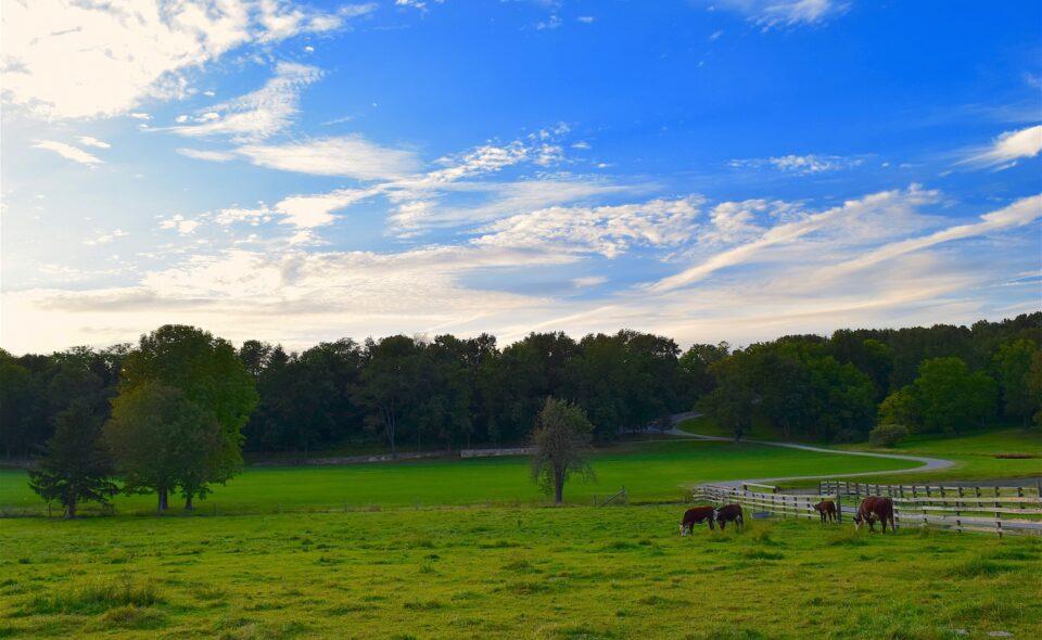 Rekrutacja do projektu – branża rolno-hodowlana