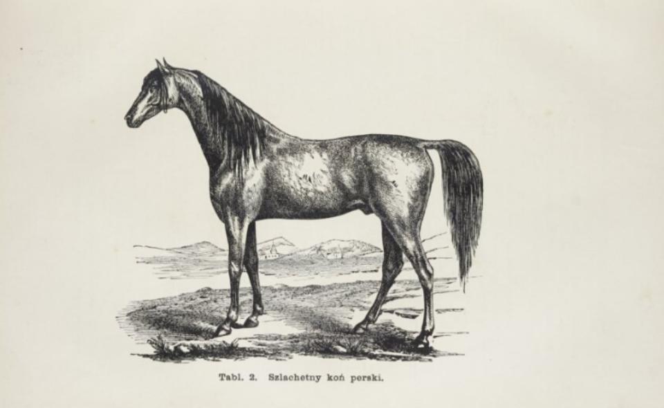Antoni Barański –  Chów koni poprzedzony wykładem ogólnych zasad hodowli zwierząt gospodarskich