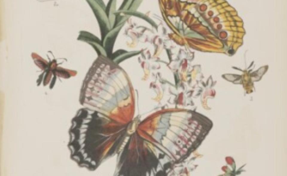 Gustaw Hayek – Wielki atlas do zoologii, botaniki i mineralogii