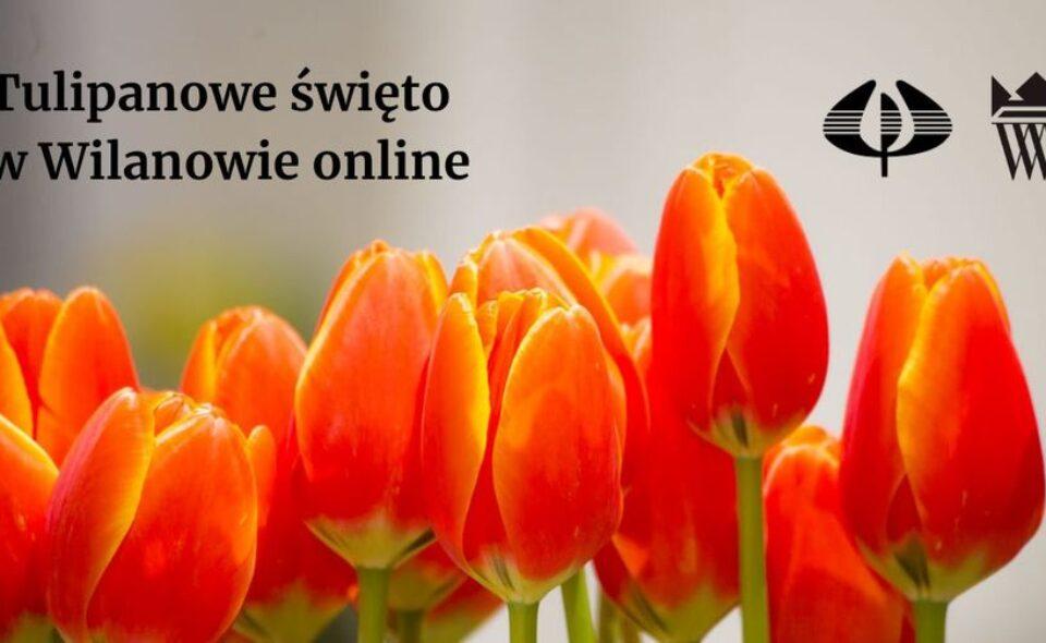 Tulipanowe święto online – Wilanów, 20-28. marca 2021r. <span class=