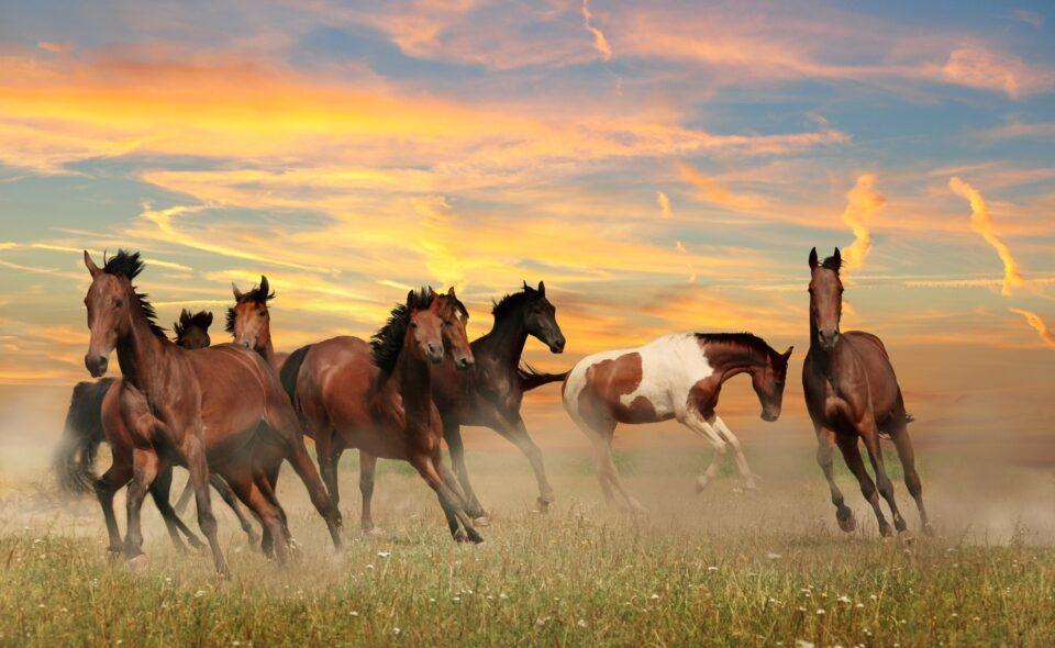 Konie i zaprzęgi konne w życiu dworskim