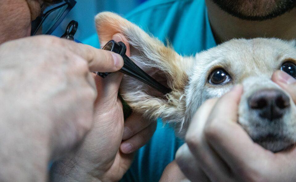 Lekarze weterynarii w służbie zwierzętom i człowiekowi. Światowy Dzień Lekarzy Weterynarii
